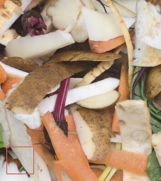 Bio déchets alimentaires